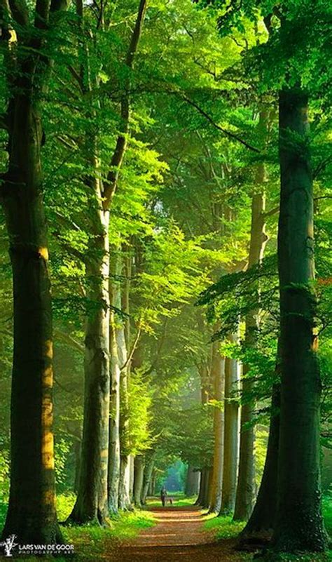 Beauty Of Summer In The Netherlands | Amazing Places